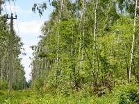 Просека и ЛЭП ведут к поселку Володарского