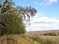 Опушка леса за Титово