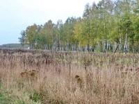 Роща да поле за деревней Редькино