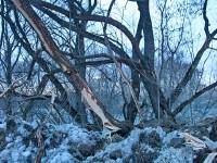 Поврежденные деревья на берегу