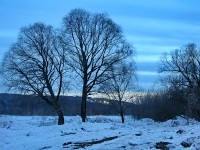 Деревья на берегу пос Тельмана