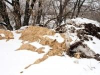 Отвалы грунта на берегу - март 2013