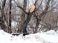 Обрезанные деревья на берегу Москва-реки - март 2013