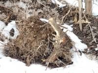 Деревья вырваны с корнем - март 2013