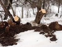 Срубленные деревья на берегу - март 2013