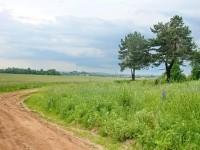 Опушка леса Боровского Кургана со стороны Каменного Тяжино