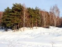 Лес на Боровском Кургане