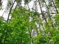 Лес на Боровском Кургане - май 2013