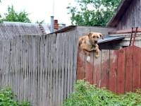 Егановская собака