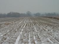 Рядом со стройкой - сельскохозяйственные поля