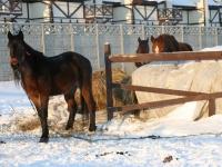 Лошади в Каменном Тяжино