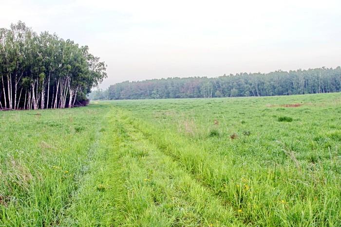 Полевая дорога в сторону деревни Прудки