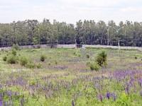 Вид на чулковское кладбище