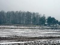 Поле возле Чулково Клаб - коттеджный поселок Кутузовские холмы