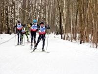 Лыжники в лесу