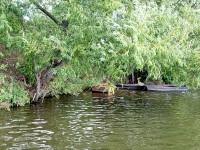 Лодки под ивами