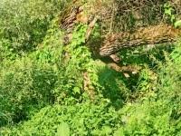 Ветка на заросшей тропинке