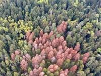 Казанский лесопарк - деревья пораженные типографом