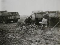 Вездеход СКБ ЗИЛ помогает сотрудникам совхоза в битве за урожай  (из архива Яна Якушкина)