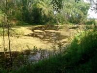 Пруд в лесу - август 2013