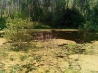 Растительность на воде - август 2013
