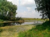 Берега пруда - август 2013