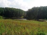 Вид на пруд Подцепня - август 2013