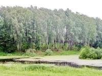 Пруд Подцепня в лесу между Титово и Щеголево