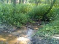 Ручей Подцепня в лесу за Щеголево