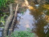 Ручей Подцепня в лесу за Щеголево - перелаз