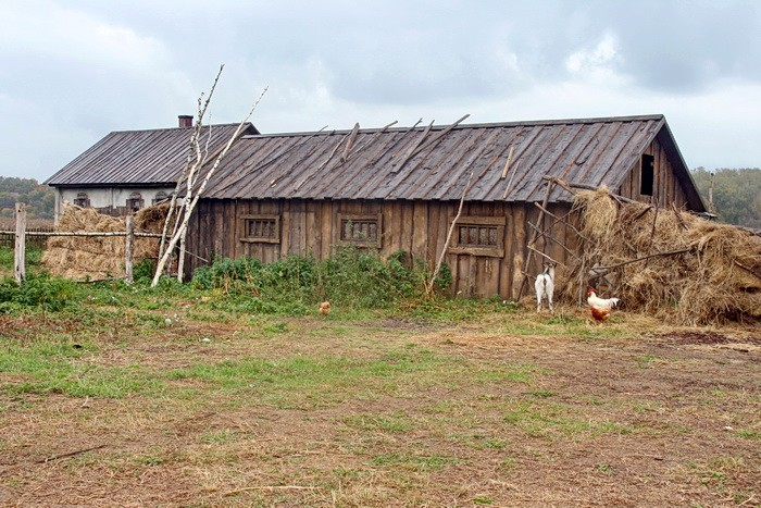 Скотный двор с домашними животными