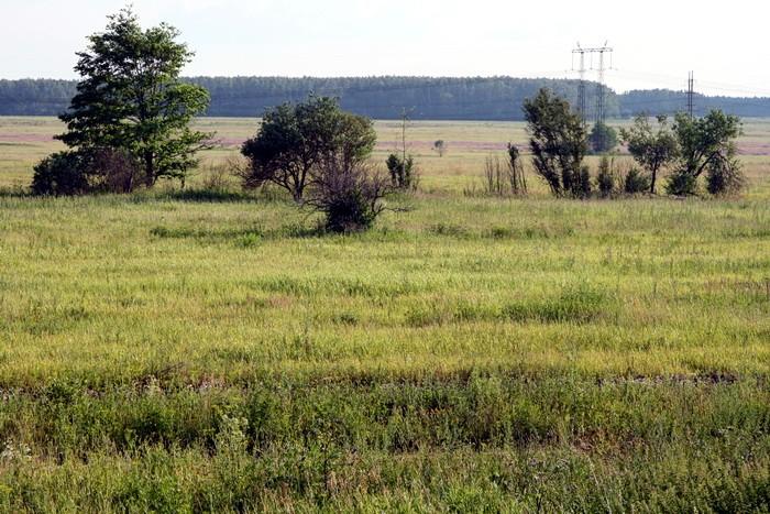Бывшее кукурузное поле возле Титово