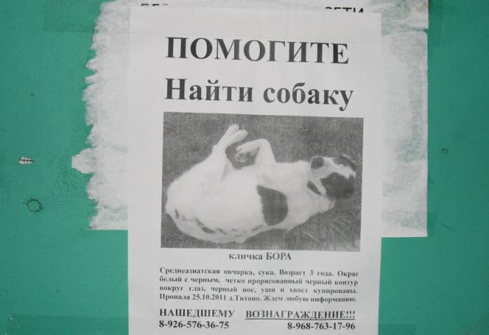 Пропала собака алабай среднеазитская овчарка