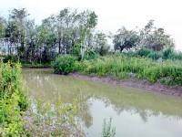 Пруд в Титово