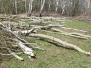 Вырубка леса в Редькино