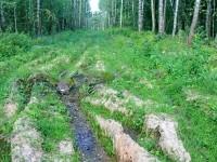На месте этой просеки полгода назад был сплошной лес - август 2013 года