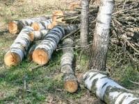 Разрубленные деревья