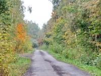 Дорого к СНТ в подберезовом лесу