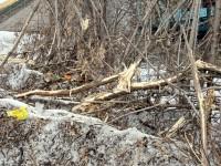 Останки деревьев- 30 марта