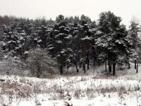 Боровской Курган - декабрь 2013