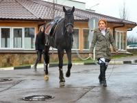 Лошадь в конном парке