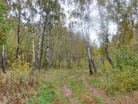 Будущее Шмелево - Дорога в роще за Редькино