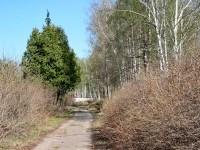 Дорожка в Шмелево оставшаяся от пионерского лагеря