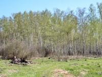 Шмелево - май 2013 - расчищенная территория