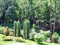 Озеленение Левадии