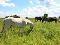Лошади далеко и близко