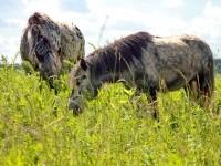 Дуэт в траве
