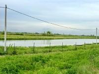 Озеро Городное - платная рыбалка в Михайловской Слободе