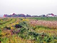 Вид с полей совхоза Тельмана на зады деревни Щеголево