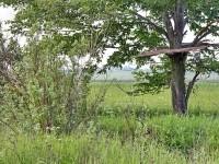 Большой титовский дуб